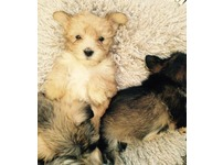 Mixed breed little pups!