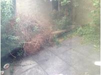 Need a tree in my back garden gone please