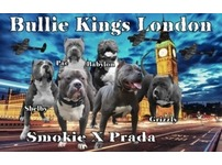 Xl American bully puppies on the ground