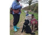 Liz Ormerod Dog Training