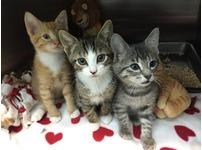 Free Kitten give away!!!