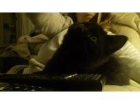 gorgeous black tabby kitten