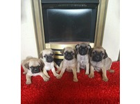 5 gorgeous lads available