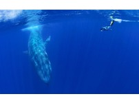 Snorkeling / Under water photography with whales - Sri Lanka