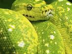 Reptile Rescue Service