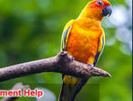 Zoology Assignment Help the best service announced by Assignment Help UK.