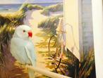Baby sky blue Indian ringneck talking parrot