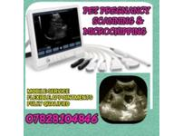 Dog Pregnancy Scan Swansea