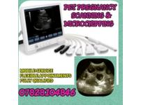 Pet ultrasound pregnancy scanning and microchipping
