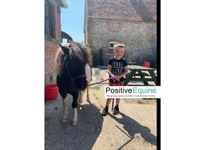 Positive Equine Mental Health Service