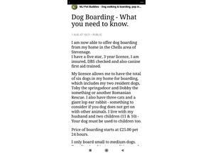 Licensed dog boarder & walker.